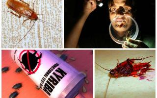 Чем и как быстро вывести тараканов в домашних условиях