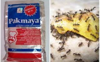 Дрожжи против муравьев на даче