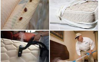 Описание и фото постельных клещей, как от них избавиться