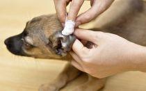Как и чем обработать от мух уши собаке