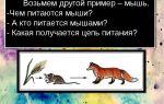 Кто питается мышами