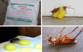Как избавиться от тараканов в квартире — народные средства