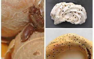 Как вывести хлебного точильщика и его личинки