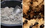 Зола от муравьев на участке