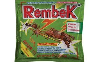 Как навсегда избавиться от тараканов в общежитии