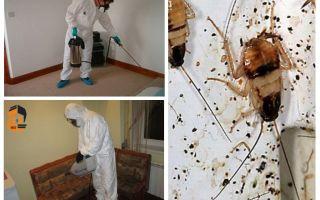 Обработка от тараканов в квартире цены и вызов на дом