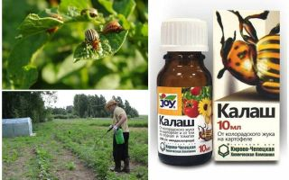 Средство калаш от колорадского жука