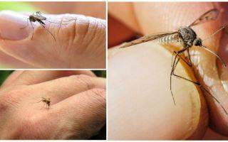 Как бороться с комарами в квартире или доме