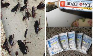 Тараканы лезут от соседей, что делать и куда жаловаться
