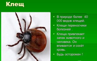 Фото и описание видов клещей