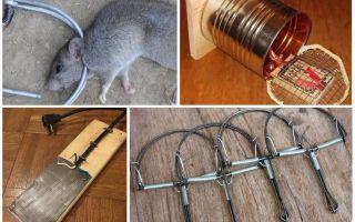 Капканы для крыс