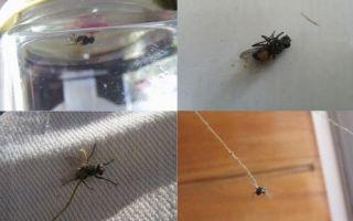 Как поймать муху в комнате