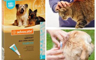 Адвокат капли на холку для кошек и собак
